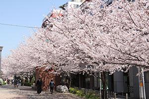 公園から桜新道方向